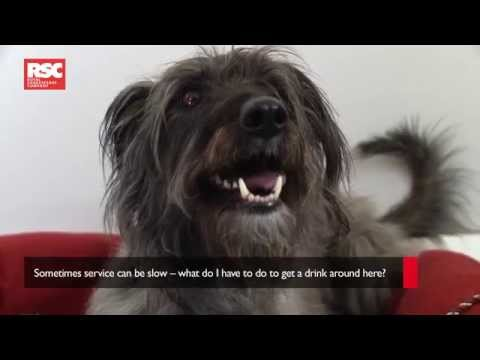 Dog Cam | The Two Gentlemen of Verona | Royal Shakespeare Company