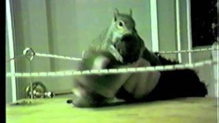 Squirrel Wrestling A Puppet - Snuggie