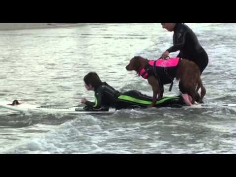 Surf dog Ricochet - Adaptive surfing highlights raw footage