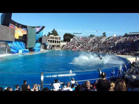 SeaWorld San Diego California |  dolphin show | travel in california