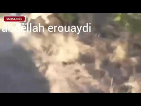 Animal world -terror attack lion foret buffalo