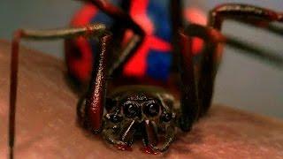 Peter Parker Gets Bitten By Spider - School Field Trip Scene - Spider-Man (2002) Movie CLIP HD