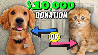 Should I donate $10,000 to a dog or cat shelter? (you decide)