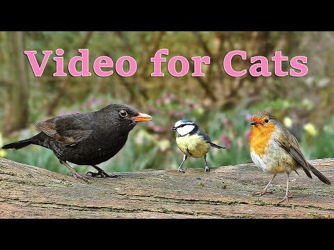 Videos for Cats : Birds in The Spring Garden - ONE HOUR