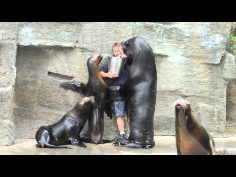 Sea Lion Feeding and Kissing