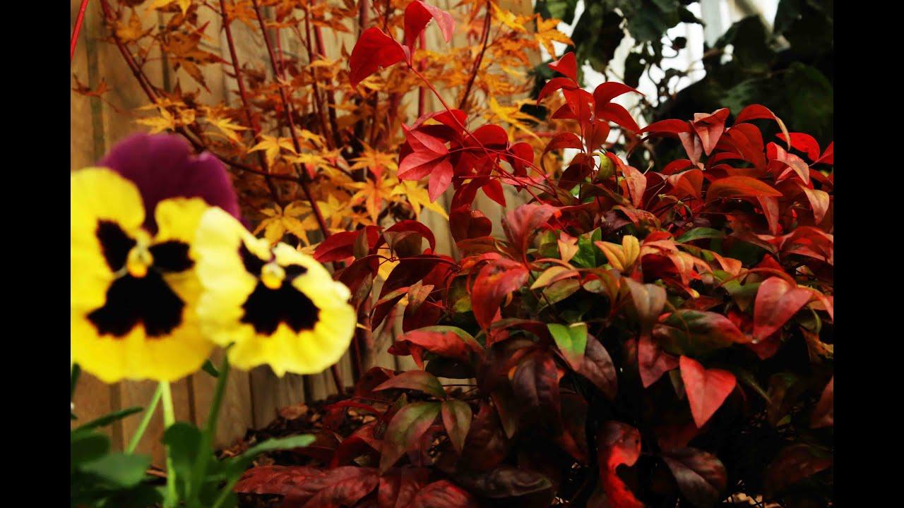 Colore e originalit il giardino invernale youtube for Giardino invernale