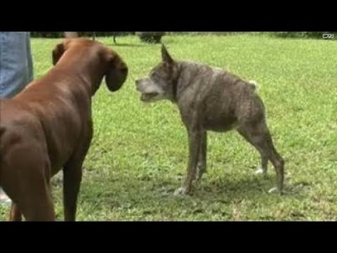 Meet The 2nd Ugliest Dog In The World Youtube