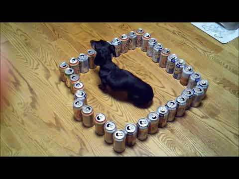 dumb vs. smart wiener dog