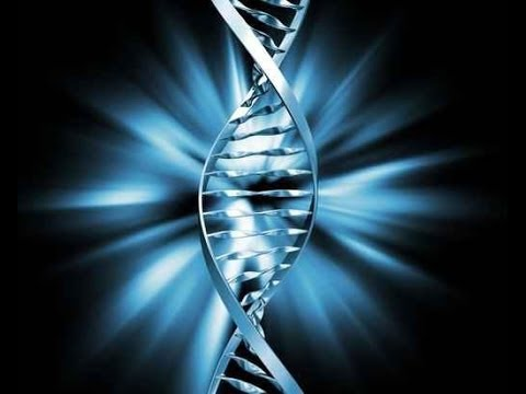 Происхождение человека. Разоблачение теории эволюции!