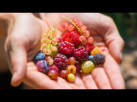 Harvesting 12 DIFFERENT kinds of BERRIES at ONCE from the GARDEN