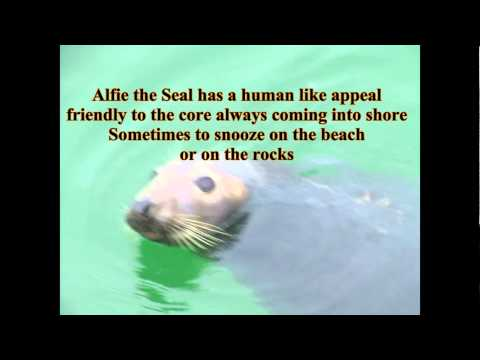 Alfie the St Ives Cornish Seal   ¸❤ ★ * ● ¸☆❤ ☾ °☆● ¸ .★ * ● ¸❤ ★