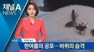 [더깊은뉴스]한여름 '바퀴벌레' 습격…접수 민원만 150건