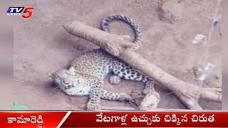 వేటగాళ్ల ఉచ్చుకు చిక్కిన చిరుత..! | Cheetah Falls Into Trap Set By Hunters In Kamareddy