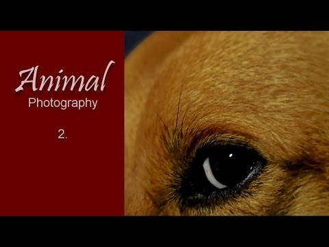 Photography: Animal Shootings #2 - Dogs, Chiens, Canino (HD video/slideshow)