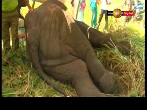 wild elephant in maw|eng