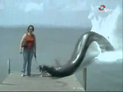 Anaconda attack.wmv