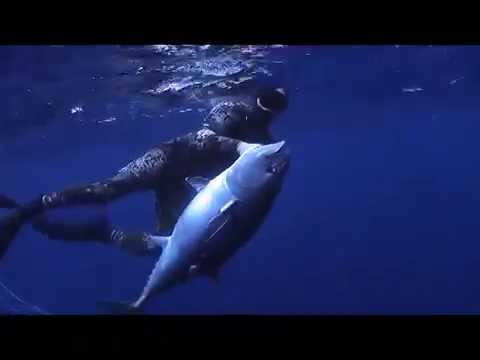 Southern bluefin tuna spearfishing Australia July 2011