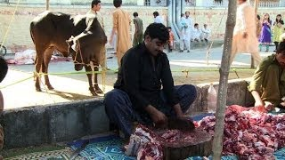 Download Cows slaughtered as Pakistan celebrates Eid al-Adha 3Gp Mp4