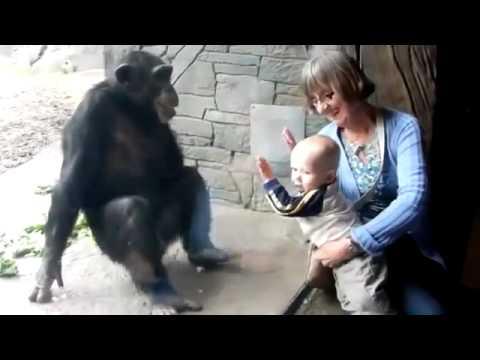 Умная обезьяна троллит ребёнка в зоопарке