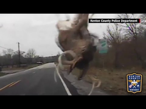 Dashcam shows officer's close call with deer