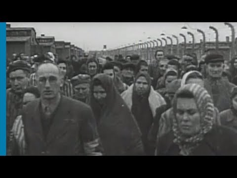 Holocaust Survivors -  Liberated but Not Free
