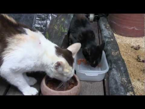 Bangkok Flood Diary 9 – 11/11/11 The Tale of the Lost Kitten
