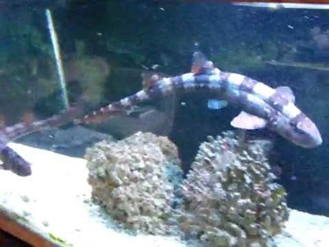 Shark Aquarium Feeding - YouTube