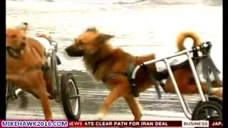 "DOGS ON WHEELS! ""DOGGY MIRACLES"""