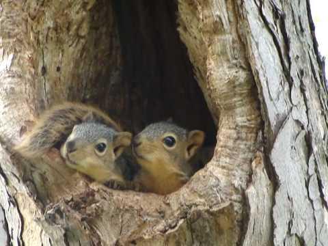 baby squirrels in nest youtube