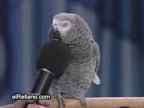 El Loro Imitador De Animales Music Videos