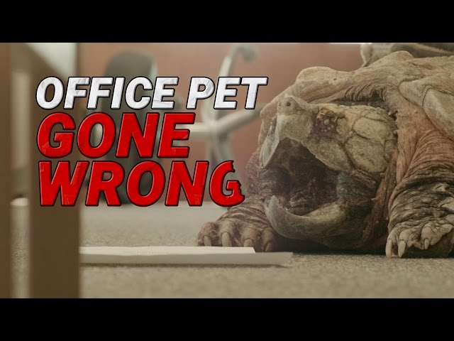 Office Pet Gone Wrong