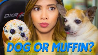 CHIHUAHUA or MUFFIN?! The Ultimate Test Game(s)