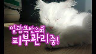 일광욕받으며 피부관리중 Sunbathing cat 日光浴受ける猫