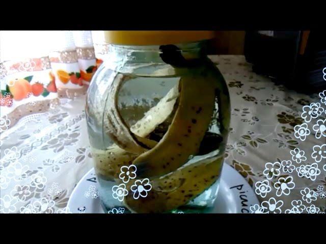 Настойка из банановых шкурок для рассады 91