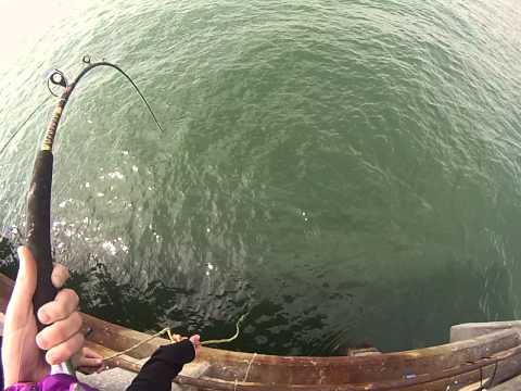 Nice Bonita at South Skyway Fishing Pier ( Filmed with Go Pro)