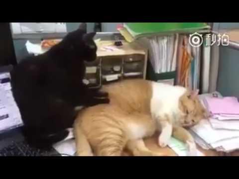 猫が猫をマッサージ♪おいっちょっと揉んでくれよ♪中々ヨカデスヨw