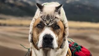 Cute is Not Enough   Funny Cats and Dogs Compilation   Part 1