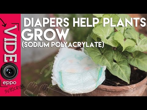 Putting Diaper Gel In Plant Soil: Diapers helps your plants grow ( 100% working), garden hacks