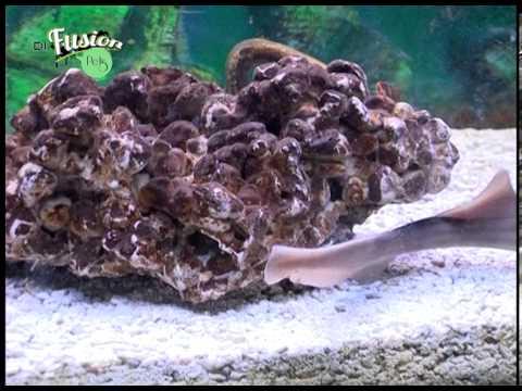 Di.Fusion Pets – Pesci barriera corallina