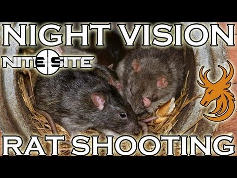Air Rifle Hunting - Night Vision Rat Shooting