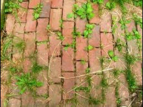 Homemade Natural Weed Killer-Pet and Kid Safe