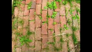 Homemade Weed Killer for Pathways & Driveways Kid/Pet Safe