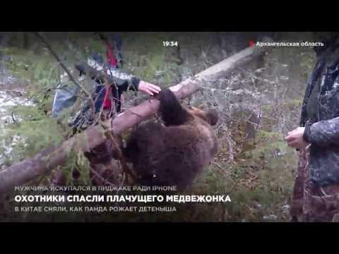 Охотники спасли плачущего медвежонка