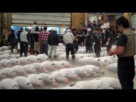 Tokyo Tsukiji Fish Market - Giant Tuna Sale. Raw Footage