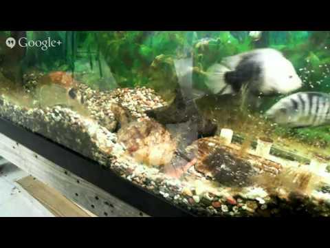 Bettendorf Middle School - Aquarium with Fry