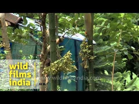 Plantation and vegetation of Kerala