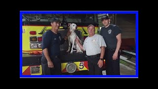 Lost Dog Wanders Into A Fire Station And Got Himself A Temporary Job| Dog Rescue Stories