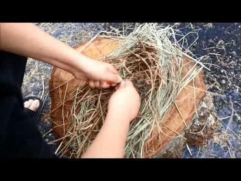 Birds Nest Making video