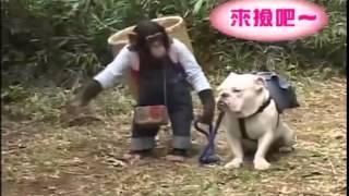 Funny Monkey and BullDog