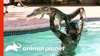 6ft Gator Battles Paul In Family Pool | Gator Boys